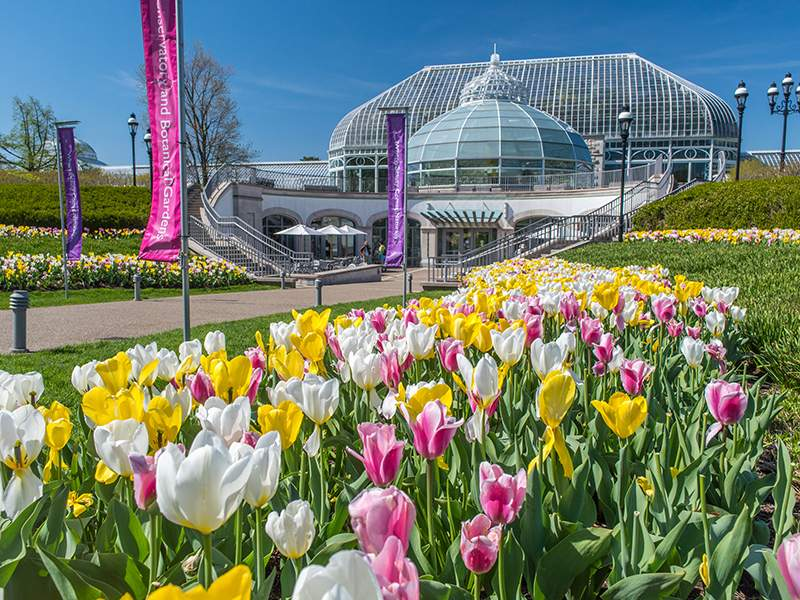 Exploring Pittsburgh: Your Guide to Phipps Conservatory