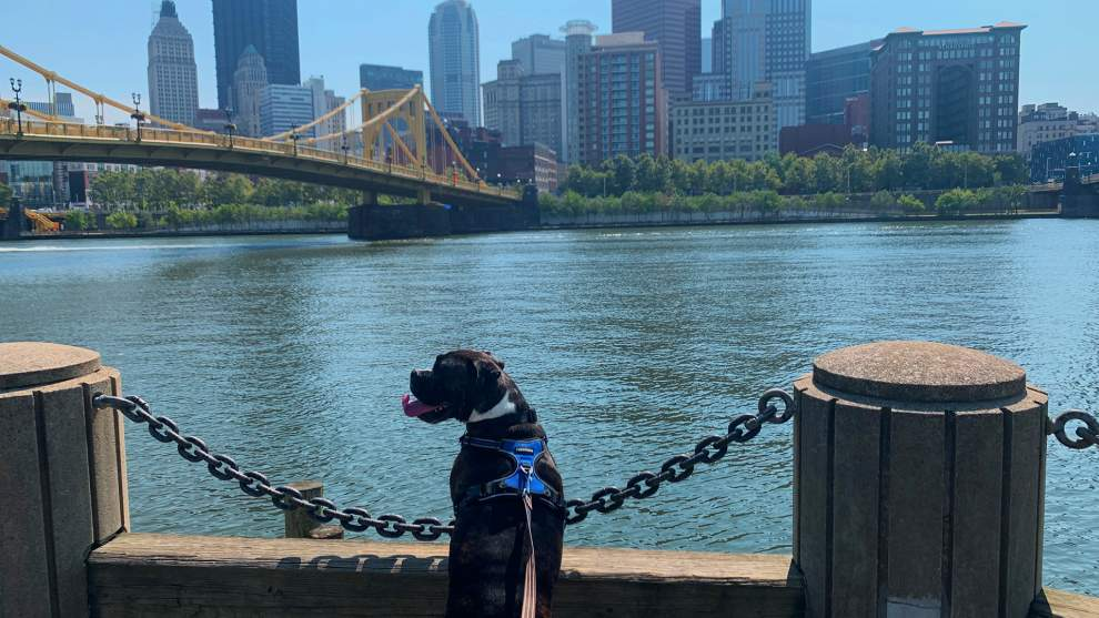 A Dog's Day in Pittsburgh