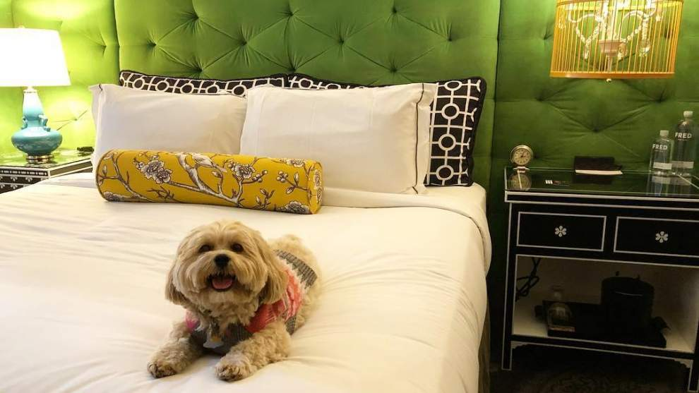 Dog-Friendly Hotels in Pittsburgh