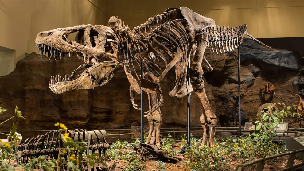 Escape to the Age of Dinosaurs at Carnegie Museum of Natural History