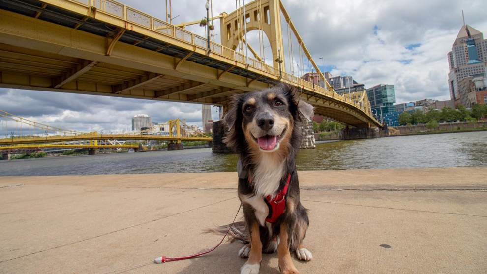 Rediscover Pittsburgh on a Roadtrip With Your Dog