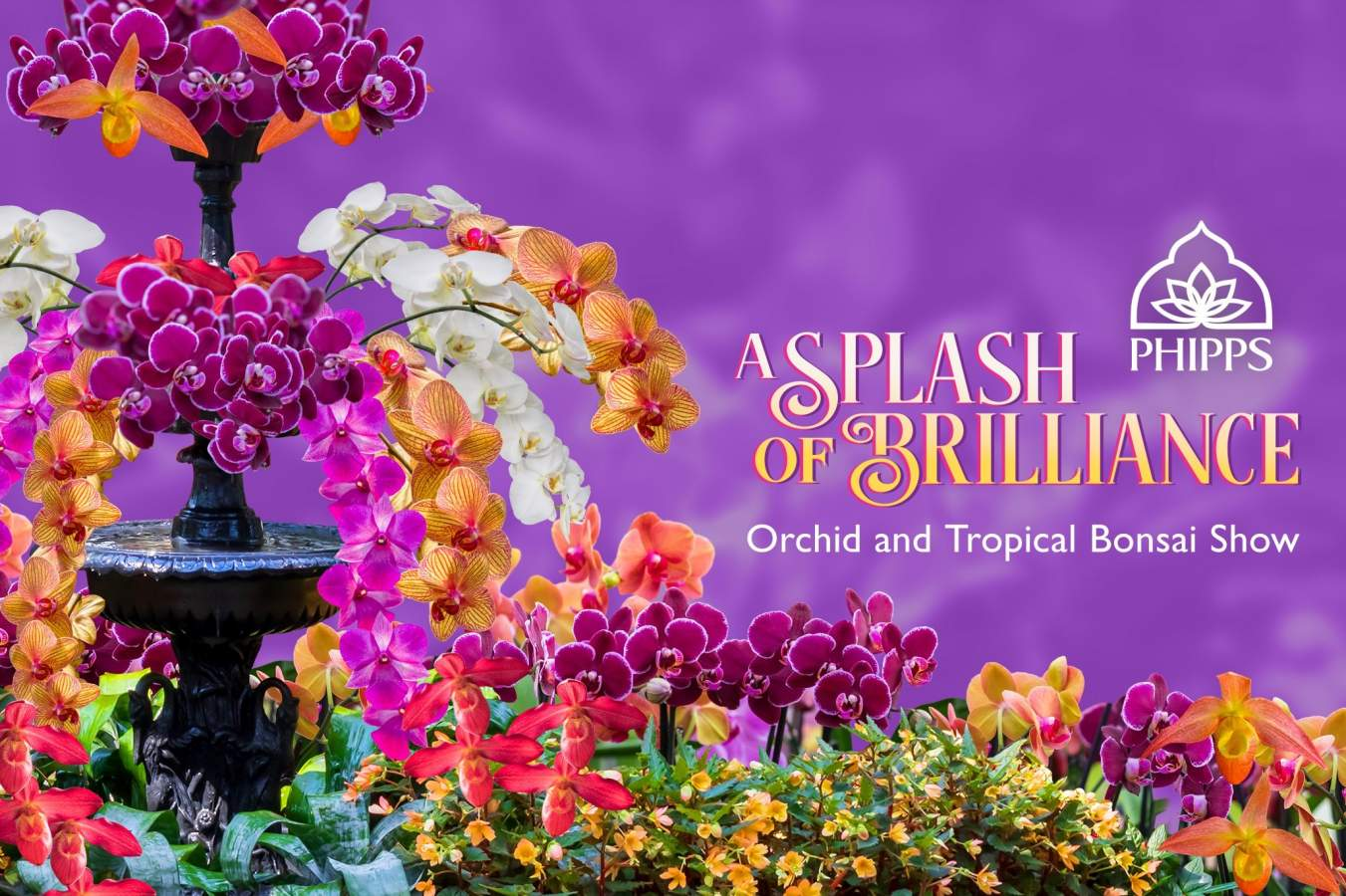 Orchid and Tropical Bonsai Show: A Splash of Brilliance